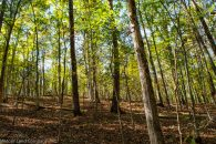 32+/- Acres in Pauline-West Springs Community