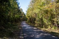 83 Acre Hunting Tract in Pea Ridge Community