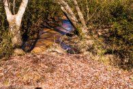 18+/- Acres Beautiful Pastureland in Cherokee Springs Community