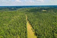 191 Acre Timberland Tract Near Whitestone