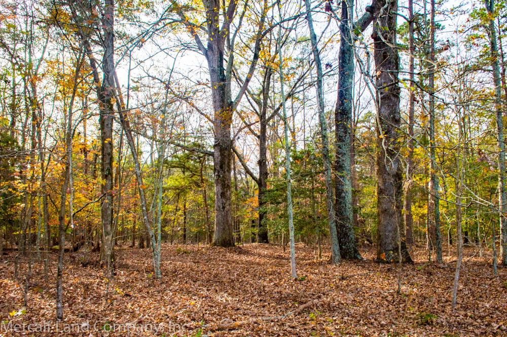 Hunting Land in South Carolina