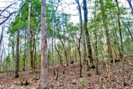15.2 Acre Wooded Tract Near Woodruff