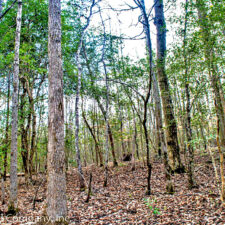15.2 Acre Wooded Tract Near Woodruff at Oakview Farms Rd, South Carolina 29388, USA for 9900