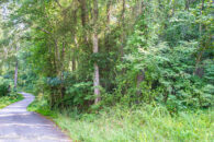 10 Acres In Cowpens With Multiple Homesites