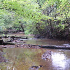 26 Acre Wooded Homesite In Woodruff On Dead End Road at Prince Rd, Woodruff, South Carolina 29388, USA for 12900